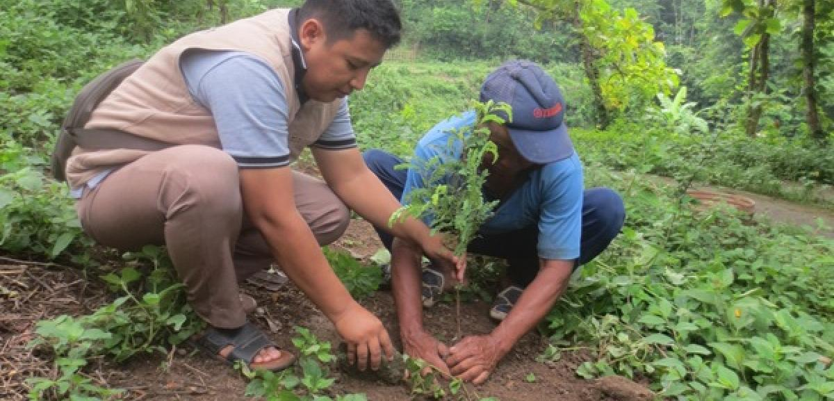 Disaster Risk Reduction Through Tree Planting