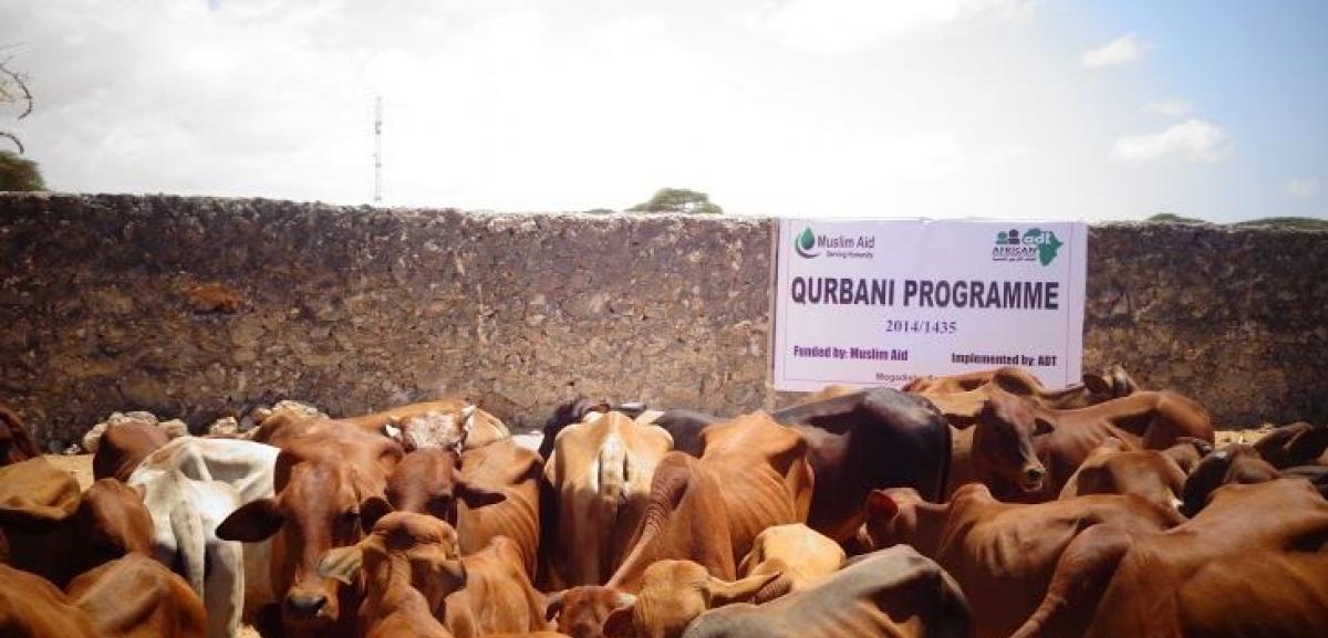 Somalia Qurbani
