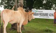 Muslim Aid Qurbani programme in Indonesia